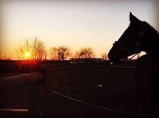 Cavallo nel paddock al tramonto