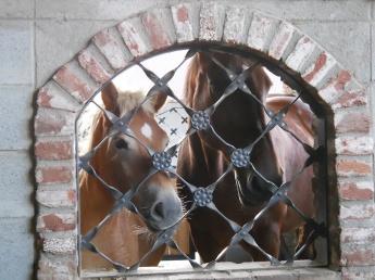 Amici cavalli