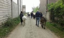 Trekking someggiati, a passeggio con gli asini alla Cascina di Carola