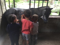 I bimbi fanno grooming: la pulizia del pony
