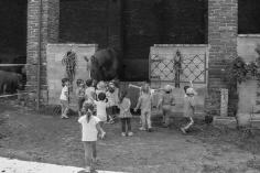 I bambini alla scoperta del cavallo alla Fattoria didattica la Cascina di Carola