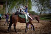 Il volteggio a cavallo: l'equitazione unita alla ginnastica artistica per la creazione dell'armonia tra uomo e cavallo